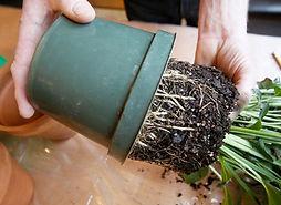 01-transplant-houseplant-botanichka.jpg