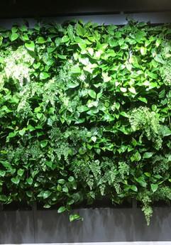 Вертикальное озеленение холла офиса MSC