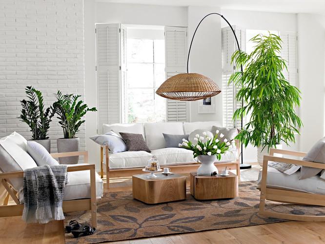 Напольные растения дома GoGardenpb