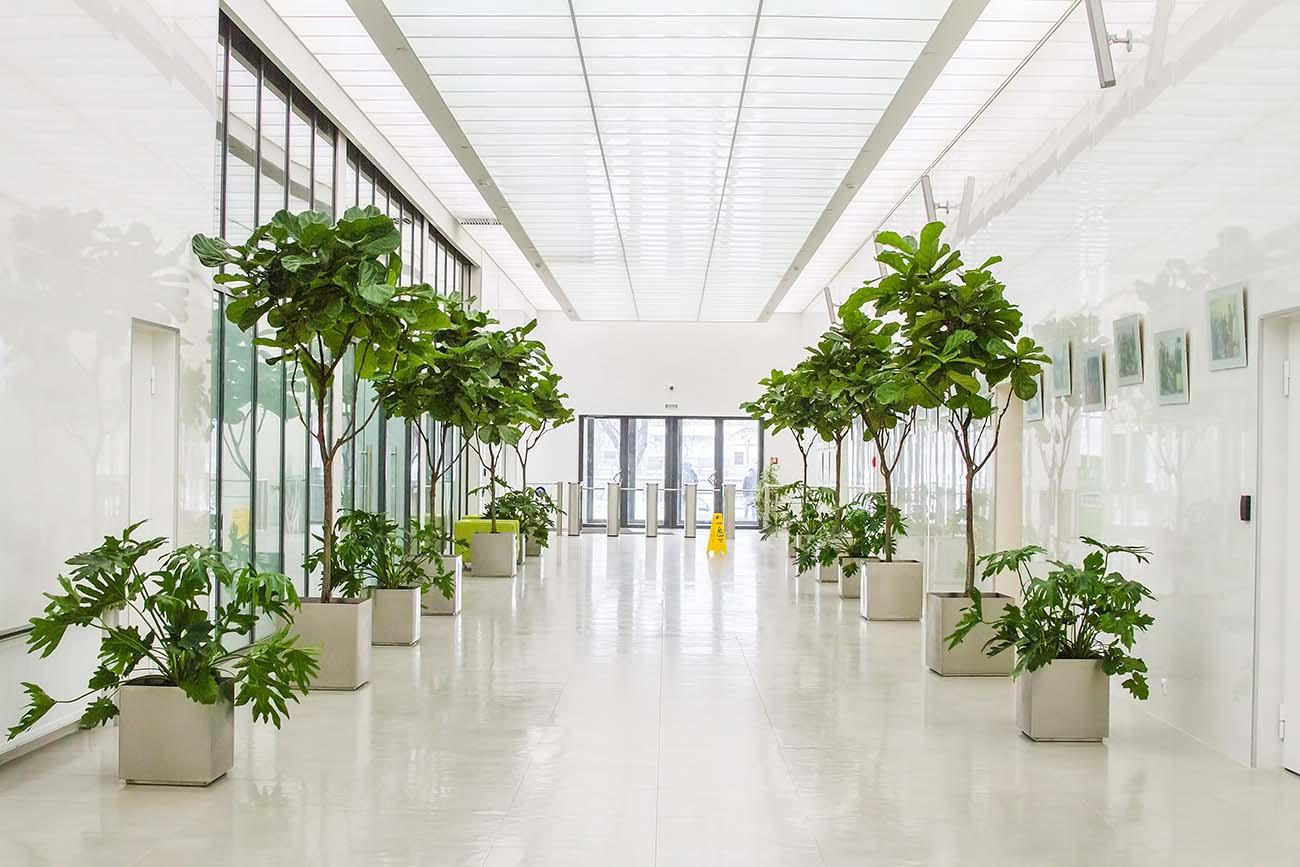 Напольные растения дома,в офисе. GoGarden в Санкт-Петербурге