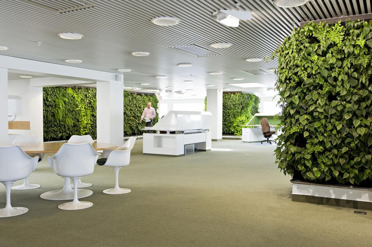 Озеленение офиса .Эко стиль в интерьере. Санкт-Петербург