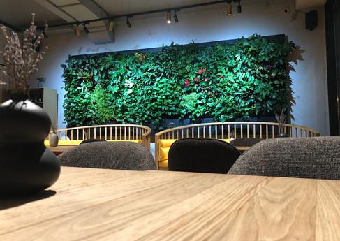 Вертикальное озеленение ресторана KRISTOF
