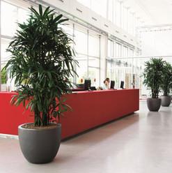 0805-Ceramic-Partner-Planter-1200x1200.j