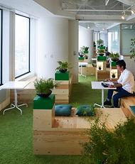 озеленение в офисе