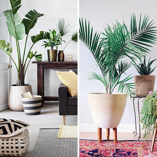 interior-palm-trees-00.jpg