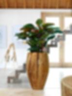 fleur-ami-okrasni-lonec-banana-428594-sl