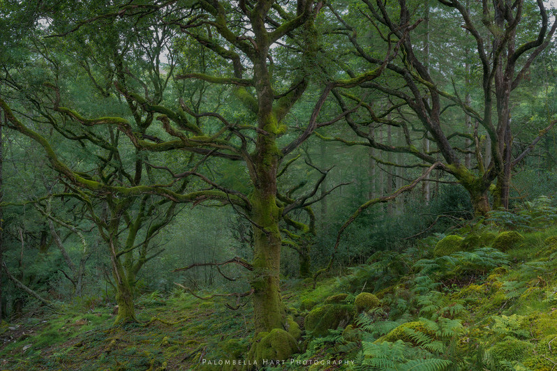 Celtic Rainforest