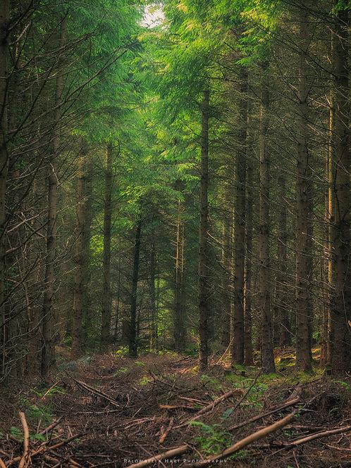 Forest Harvest
