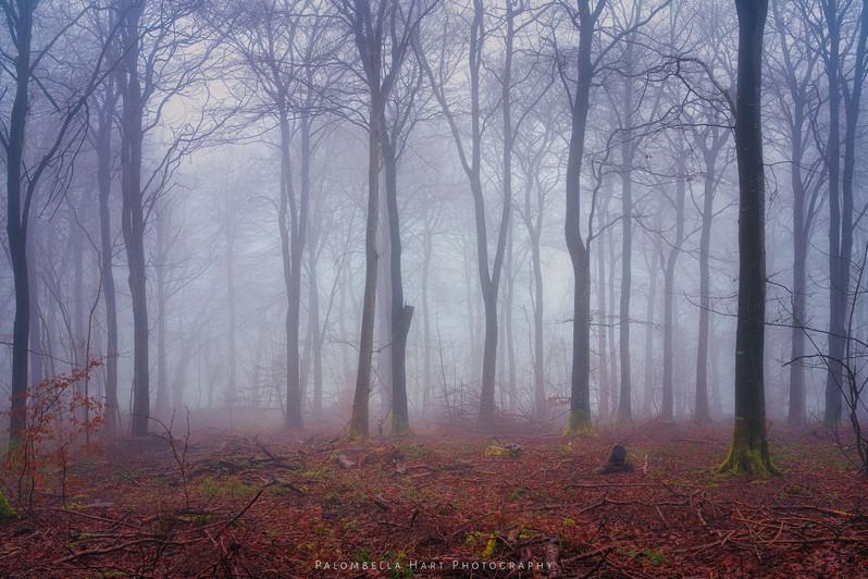 Bryn-dansi-spooky-wood-14-jan-2021-copy.