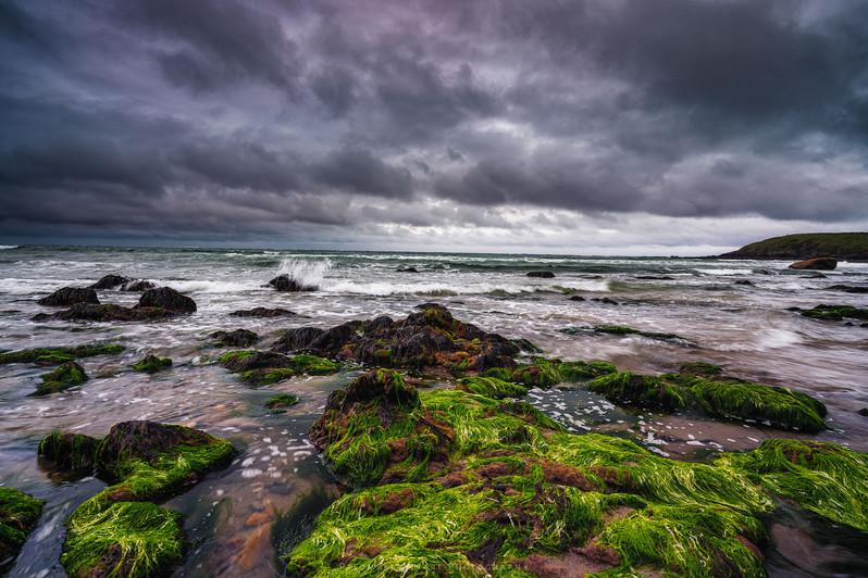 Bright Green Seaweed