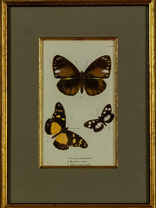 105 Papilionidae (Set of 2 Prints) | Papilionidae (Ensemble de 2 estampes nu...