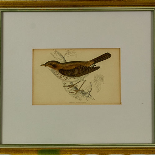 104 Fieldfare & Thrush (Set of 2 Prints) | Fieldfare & Thrush (Ensemble de 2...
