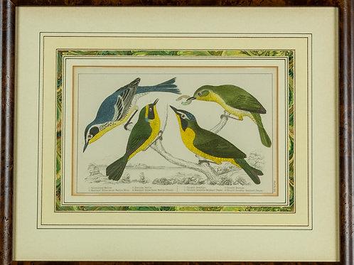 103 Warblers (Print) | Fauvette (Estampe numérique)