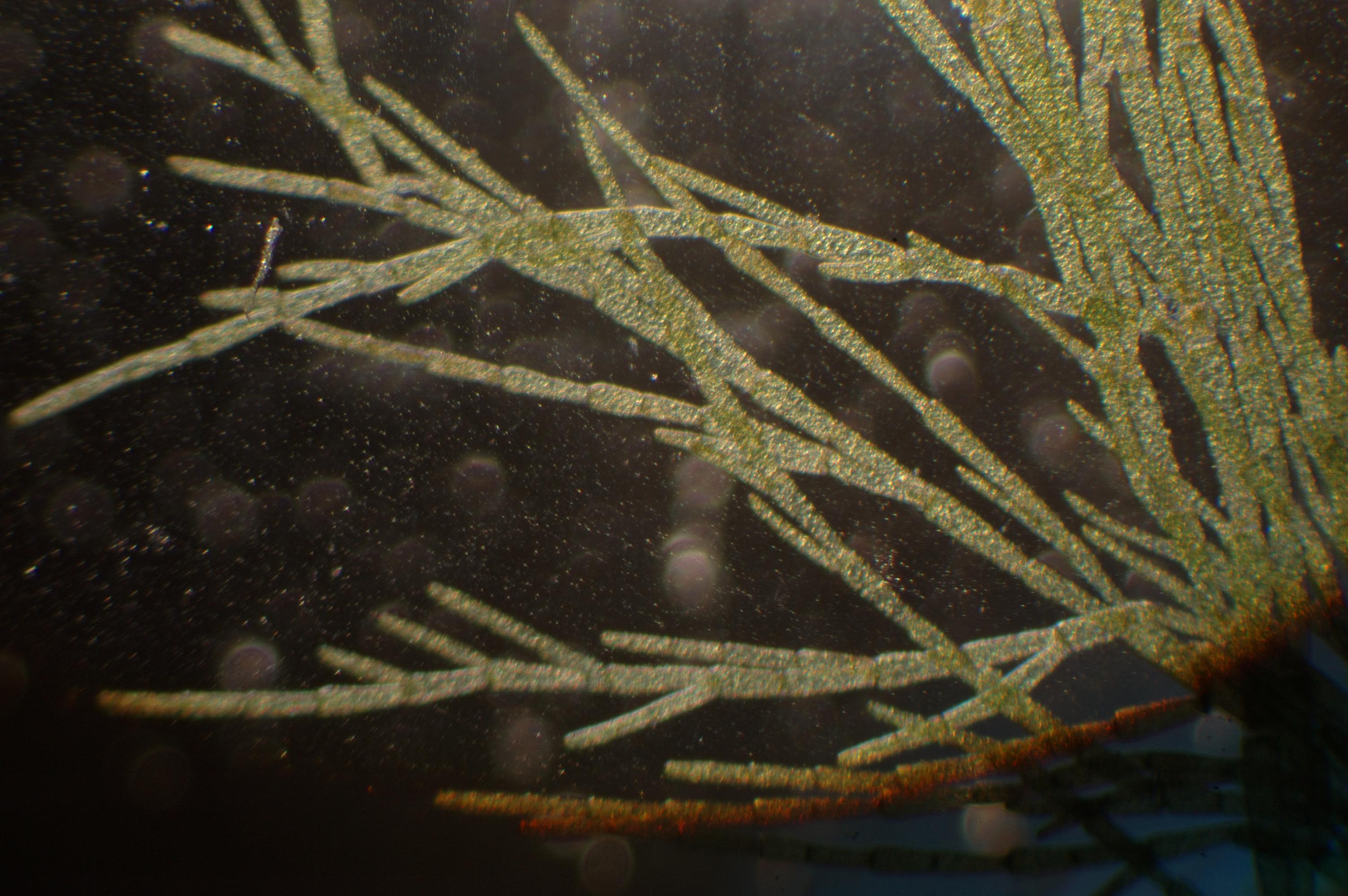 micrograph13.jpg