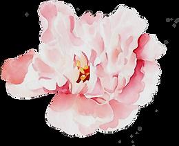 kisspng-floral-design-5d40f4ed000152.453