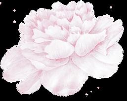 kisspng-cabbage-rose-picsart-photo-studi