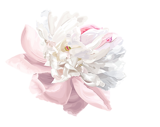 kisspng-watercolor-painting-peony-peony-