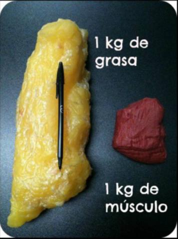 volumen comparativo grasa y músculo
