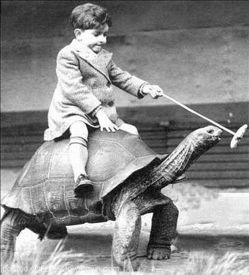 En el cuento gana la tortuga