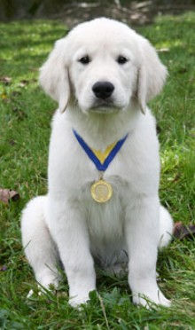 puppy-e1354060436538.jpg