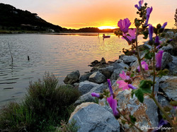 sunset signe