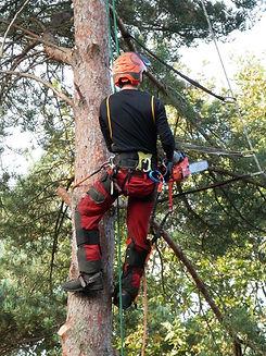 Lumberjack Tree Service business