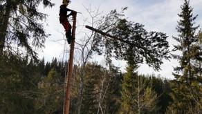 Frifunnet i sak om kutting av trær