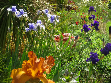 Irises take their name from the Greek word for rainbow....
