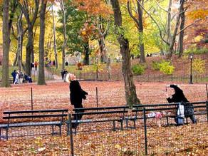 Por que conhecer Nova York no outono?