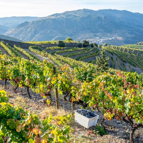 Symington Family Estates conquista o Douro