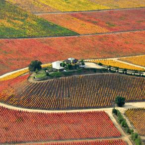 O'Higgins: O vinho do Chile no centro