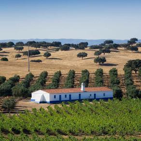 Programa de Sustentabilidade dos Vinhos do Alentejo recebe Prêmio