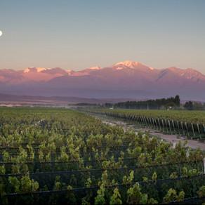 Chakana Andean Wines: Vinhos para o futuro