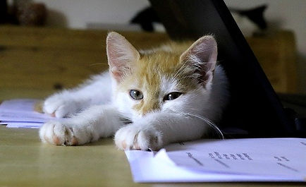 kitten-relaxing-on-document.jpg