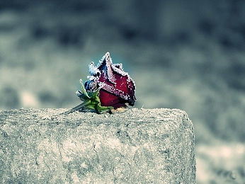 snowy-red-rose-on-tombstone.jpg