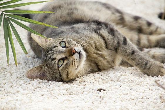 tabby-cat-on-beige-carpet.jpg