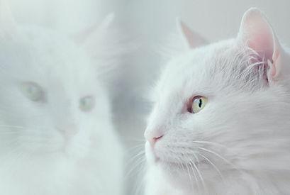 oleg-danylenko-white-cat-reflected-in-wi