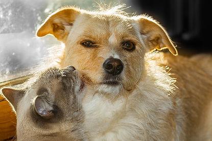 yellow-cat-kissing-yellow-dog.jpg