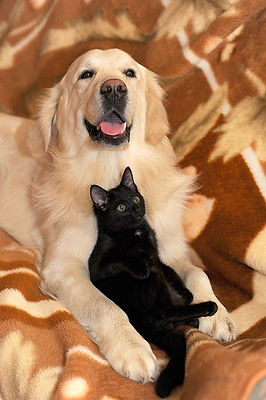yellow-lab-and-black-cat-on-rug.jpg