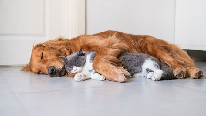 cat-and-dog-curled-up-together-sleeping.