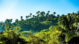 Jungle Canopy.jpg