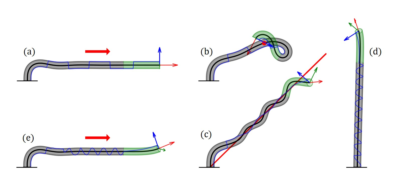 A general 3D model for growth dynamics of sensory-growth systems: from plants to robotics