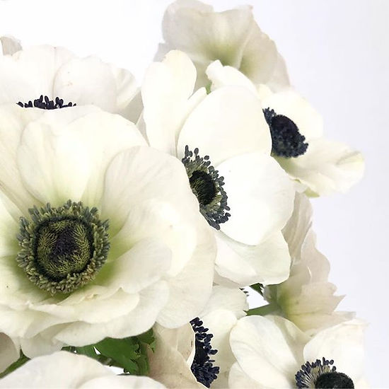 If you love anemones be sure you enter t