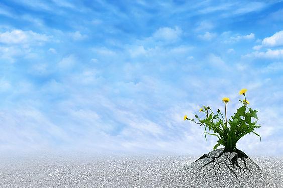 resilience-1-.jpg