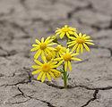 resilience-Eppel-Siegel-1-1024x1011.jpg