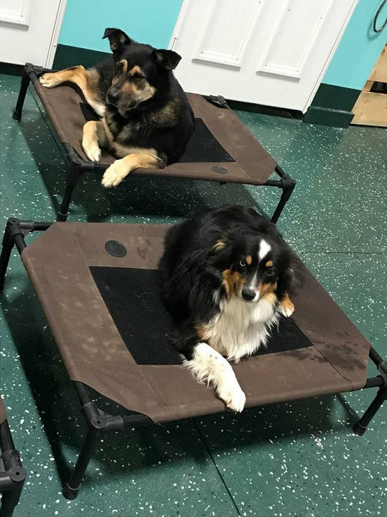 What should you look for in a dog boarding kennel?