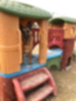 dogboardingkenneledmonton.jpg