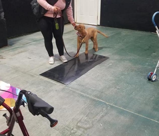puppy class Leduc