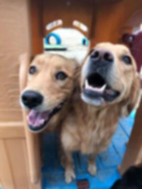 DogsinDaycareBoardingEdmonton.jpg