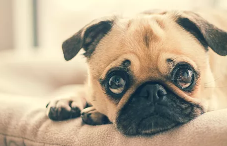 Kennel Cough - what is it and why does my dog have it?!!